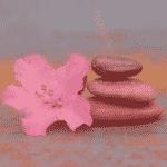 Méditation Zen - Pleine Conscience et Alchimie des émotions